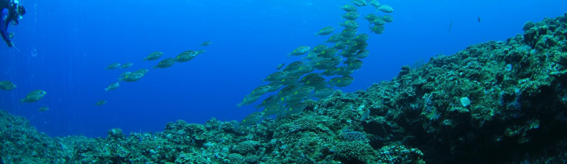 Underwater Education